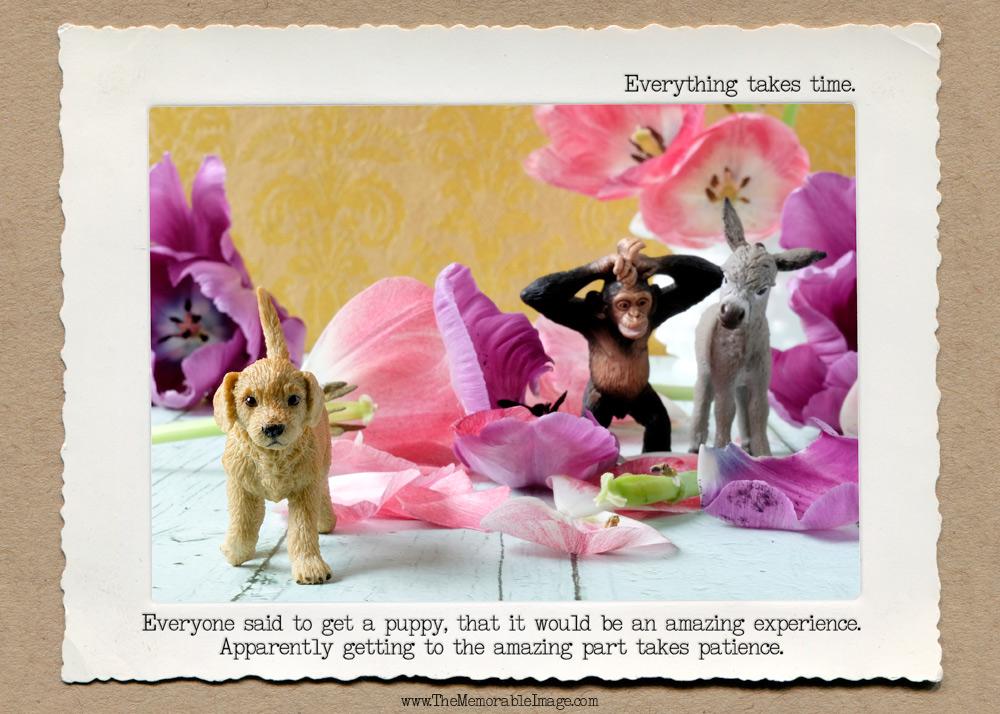 Dog_Patience_C_W.jpg