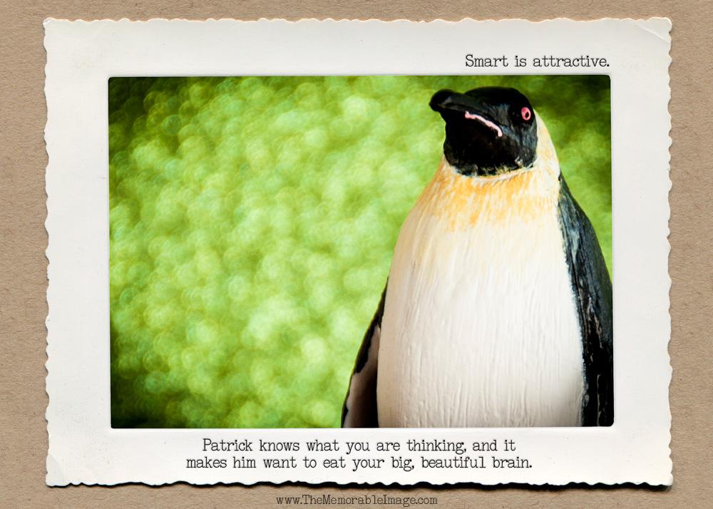 Zombie_Penguin.jpg