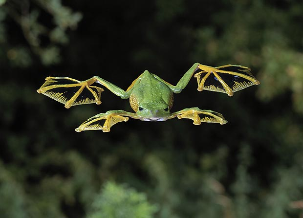 frog_m_1804347a.jpg