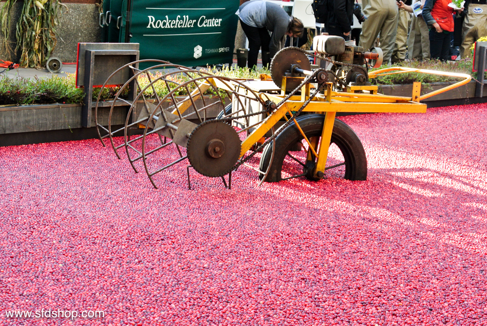 Ocean Spray Big Apple Bog fabricated by SFDS -8.jpg