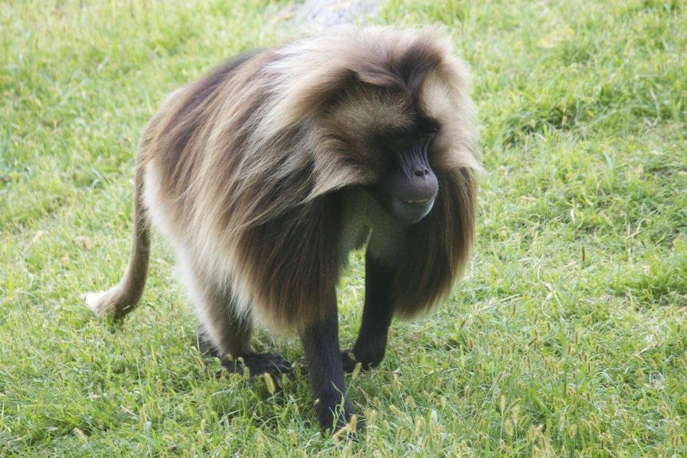 baboon-1024x682.jpg