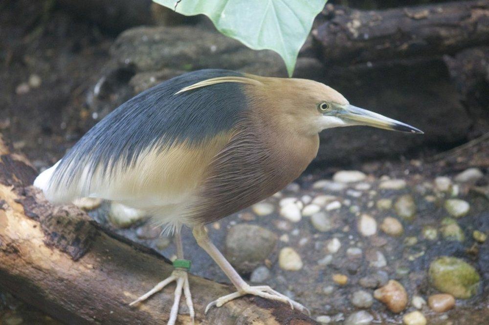 bird-1024x682.jpg