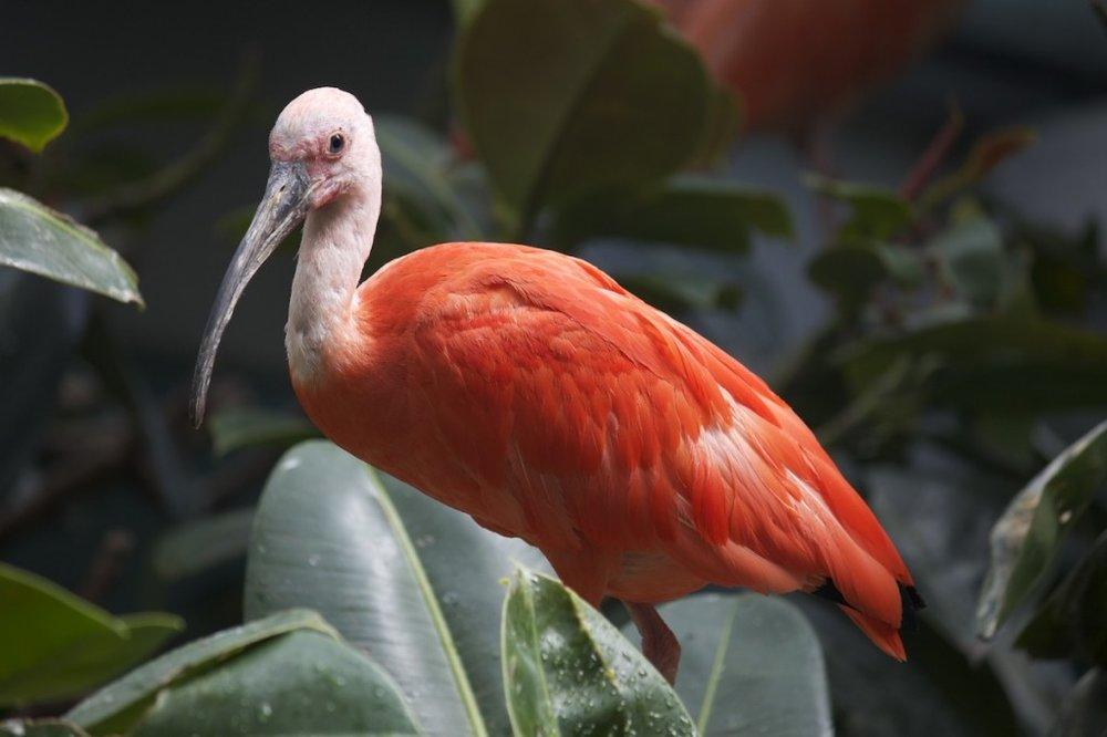 pink-bird-1024x682.jpg