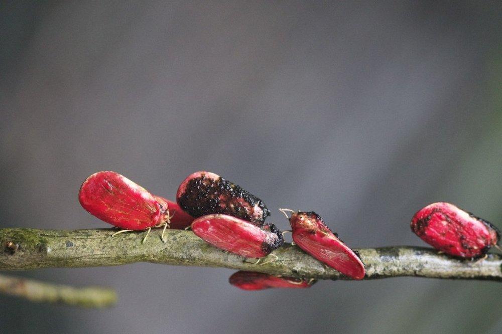 red-beetles-1024x682.jpg