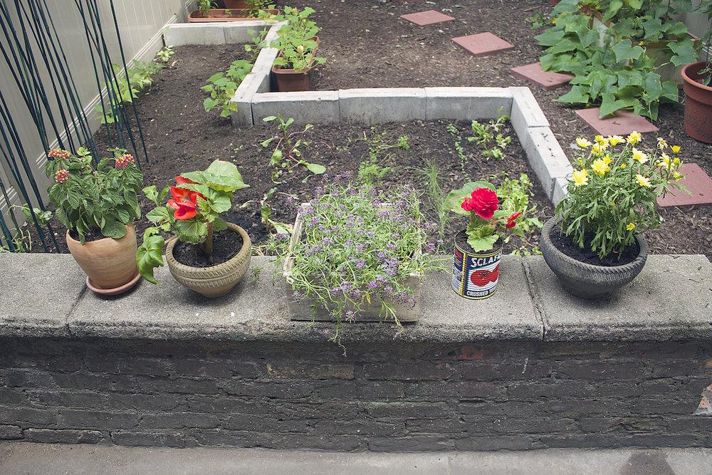 backyard-plants.jpg