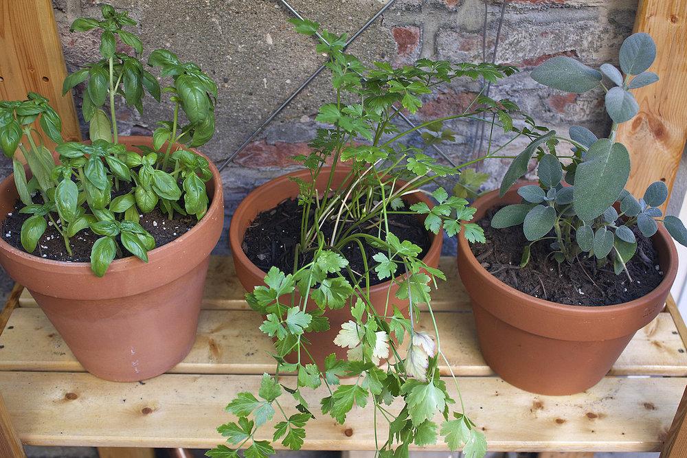 herb-plants.jpg