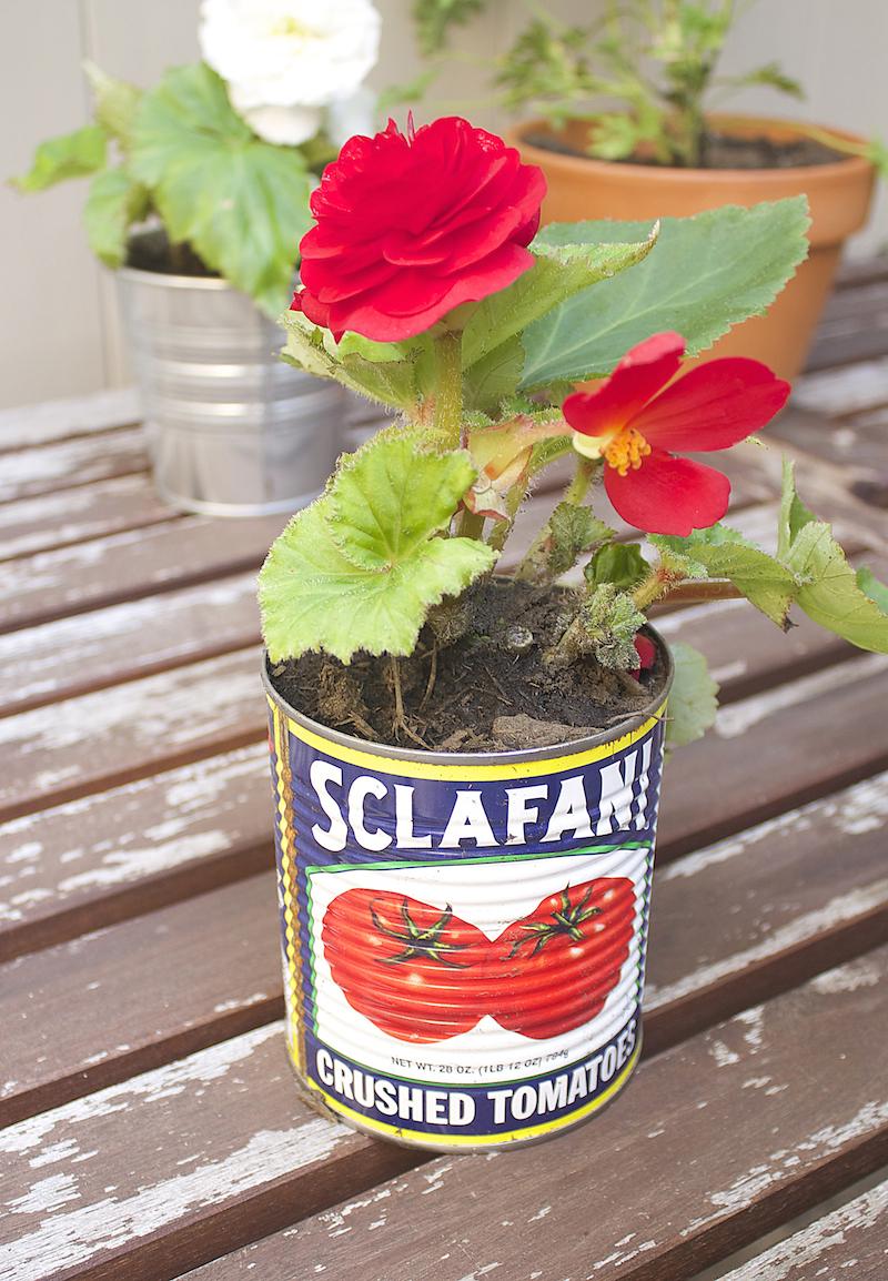 tomatoe-can-flower-pot.jpg