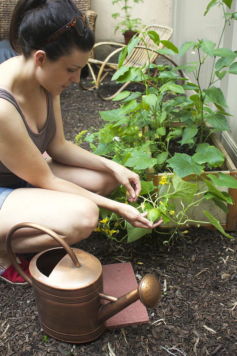 urban-garden-tips.jpg