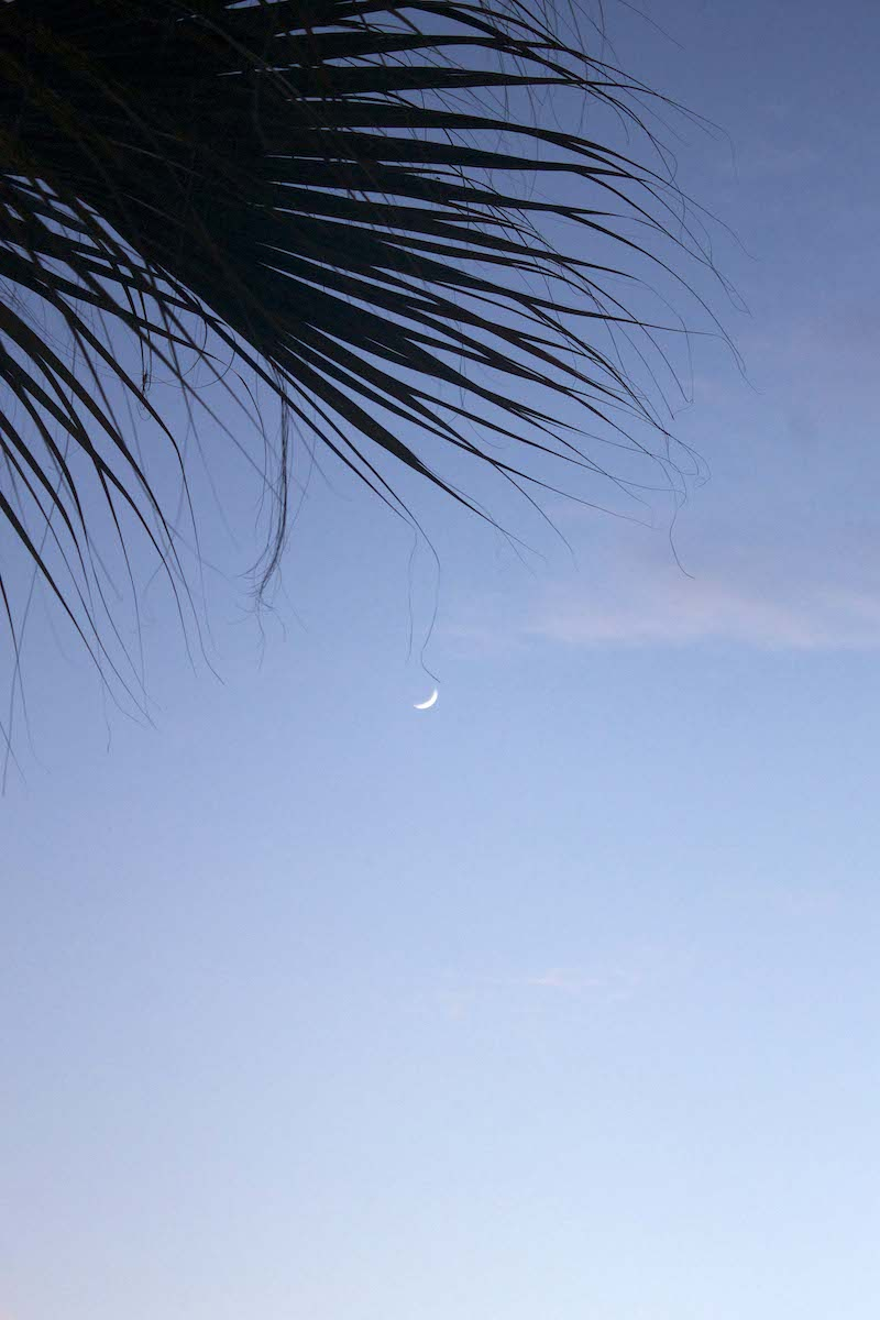 palm-tree-and-the-moon.jpg