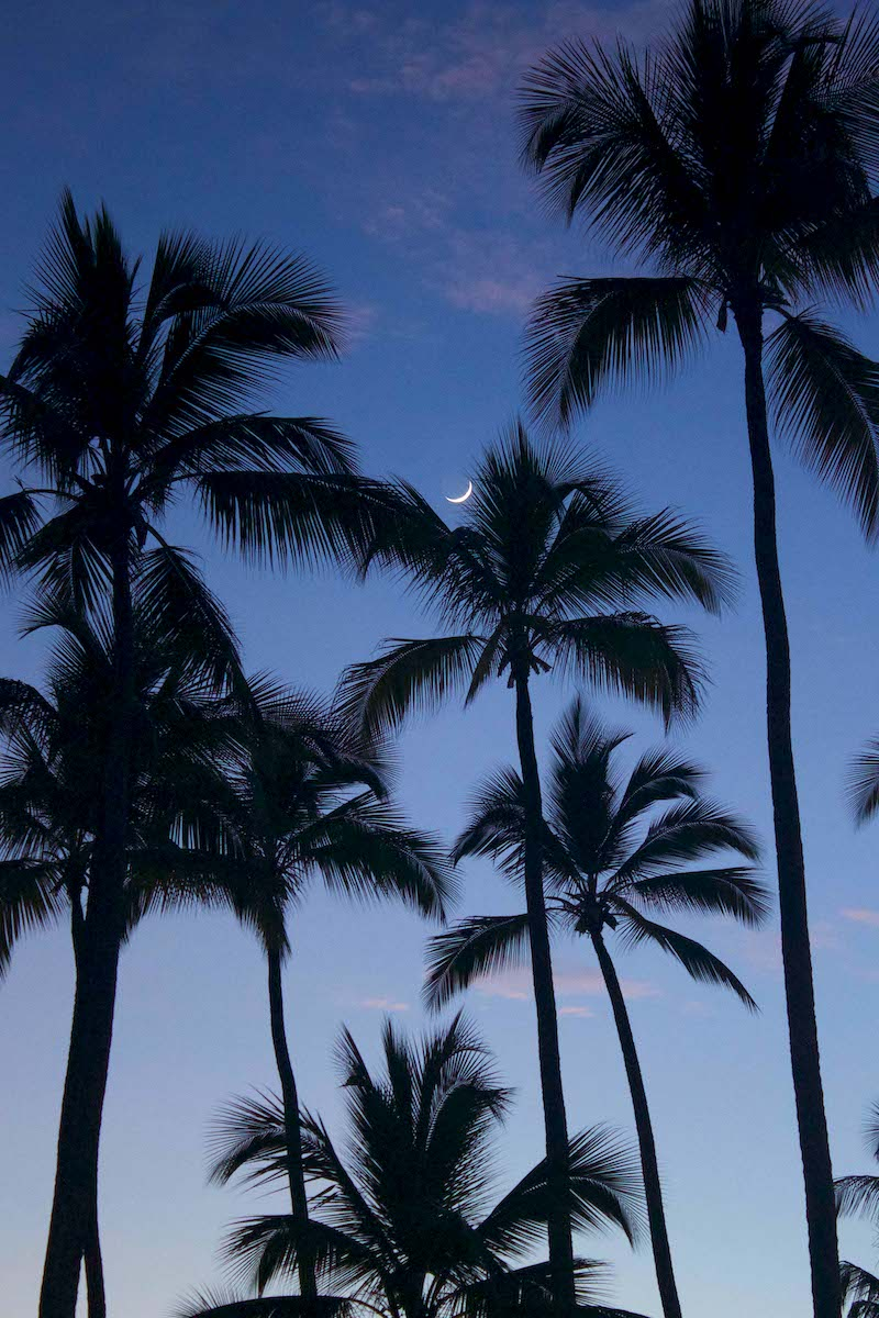 palm-trees-at-night.jpg