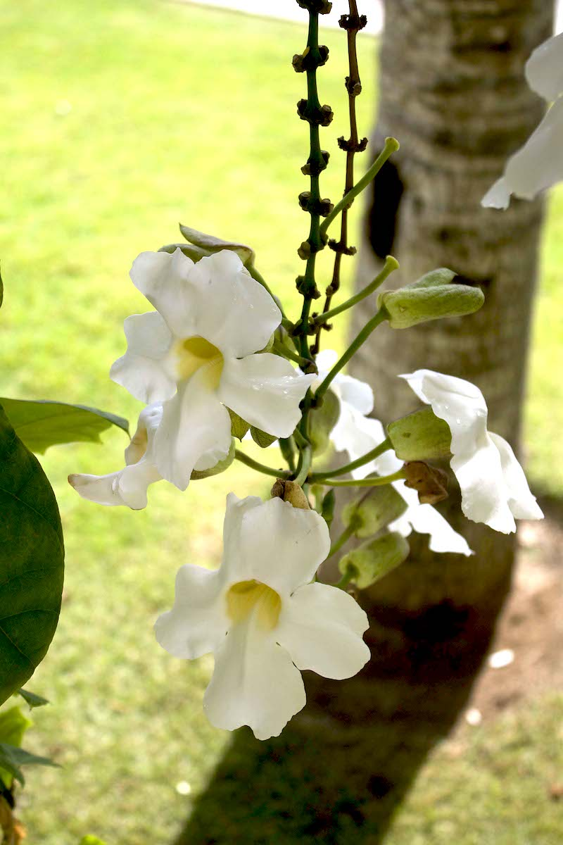 tropical-flowers-in-Punta-Cana.jpg