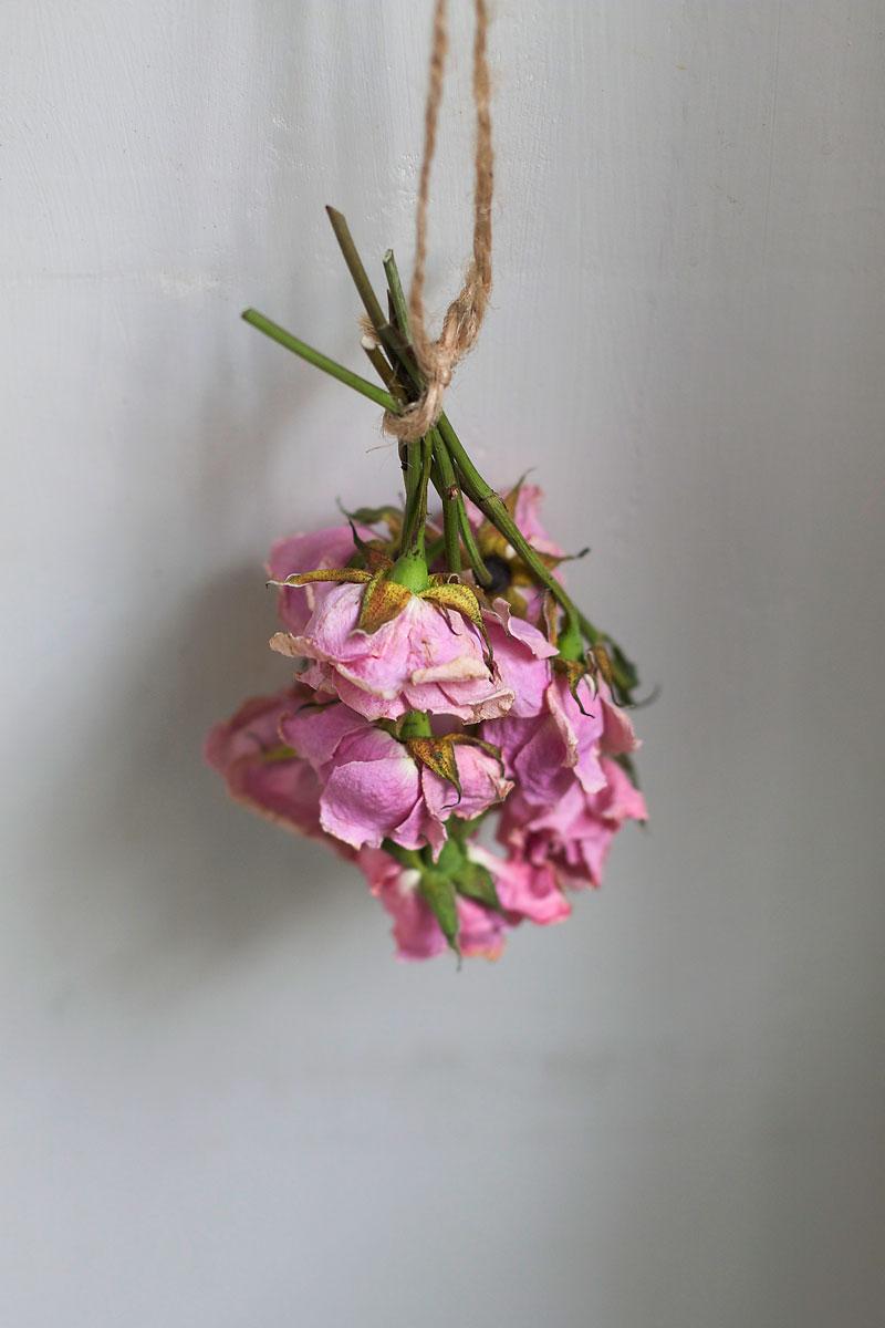drying-roses.jpg