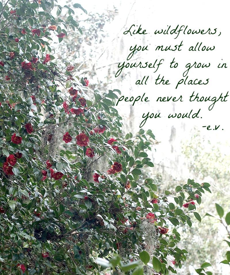 wildflower-quote.jpg