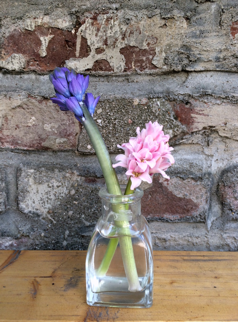 mini-hyacinths.jpg