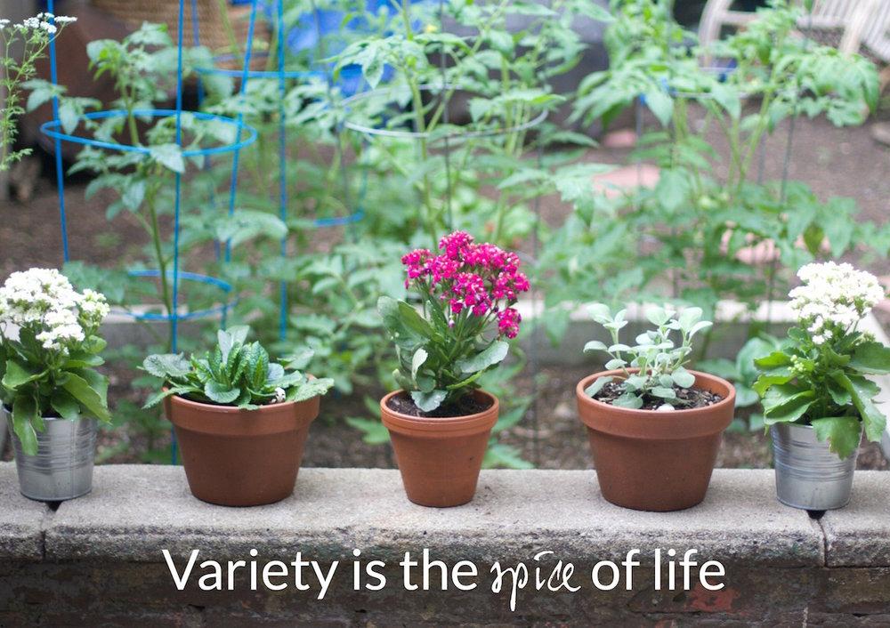 plant-varieties.jpg