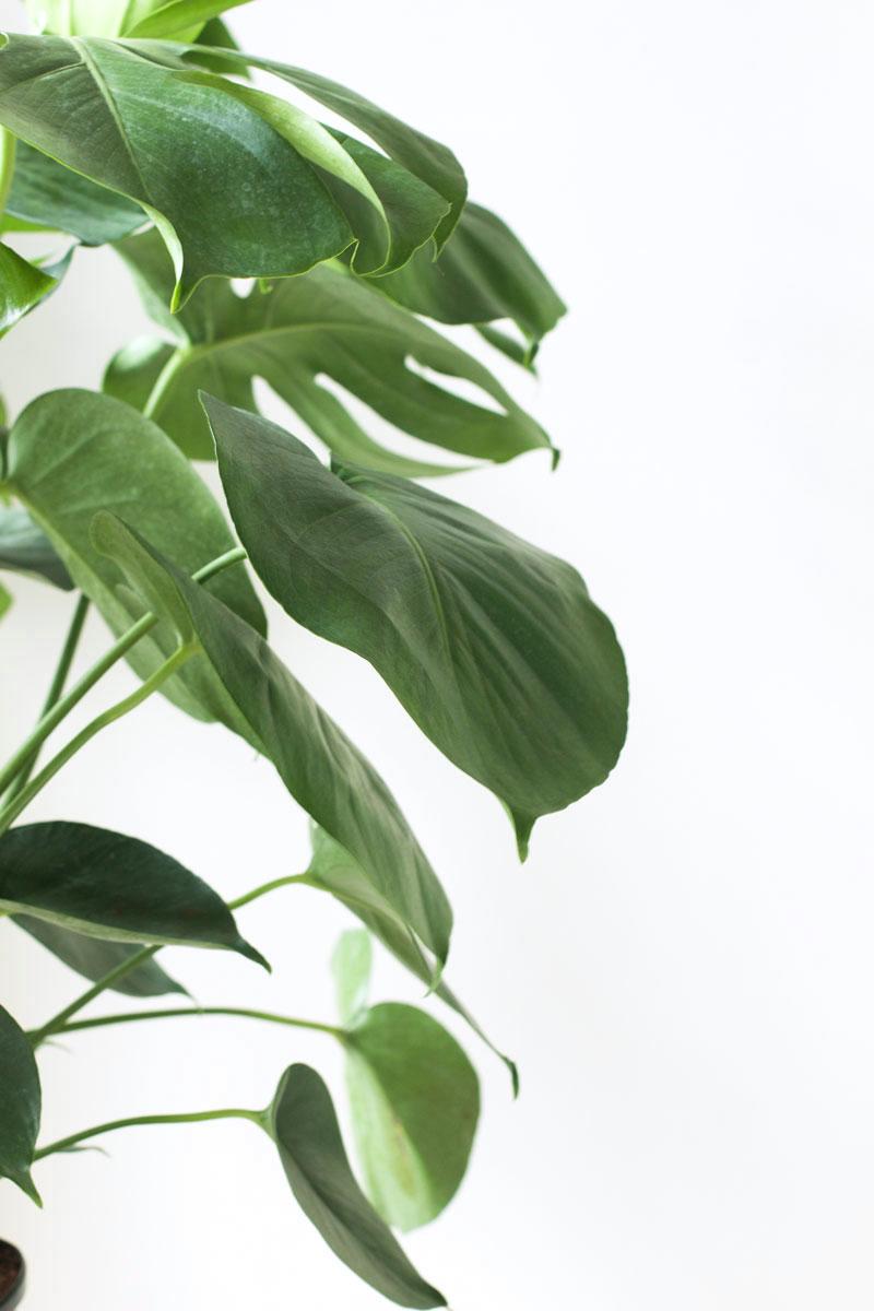 indoor-plant.jpg