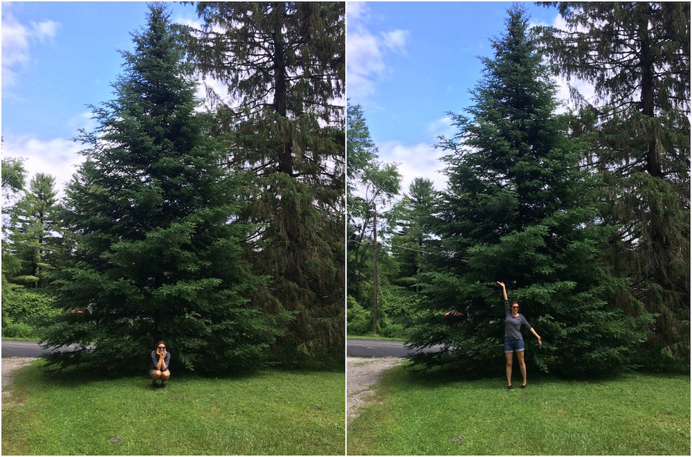 pine-tree.jpg