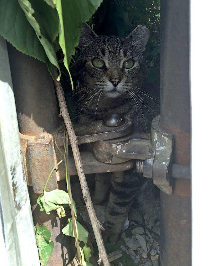 Striped-Cat-Brooklyn.jpg