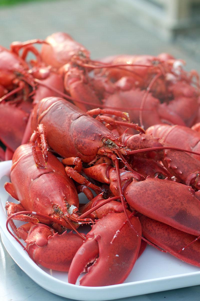 fresh-lobster.jpg