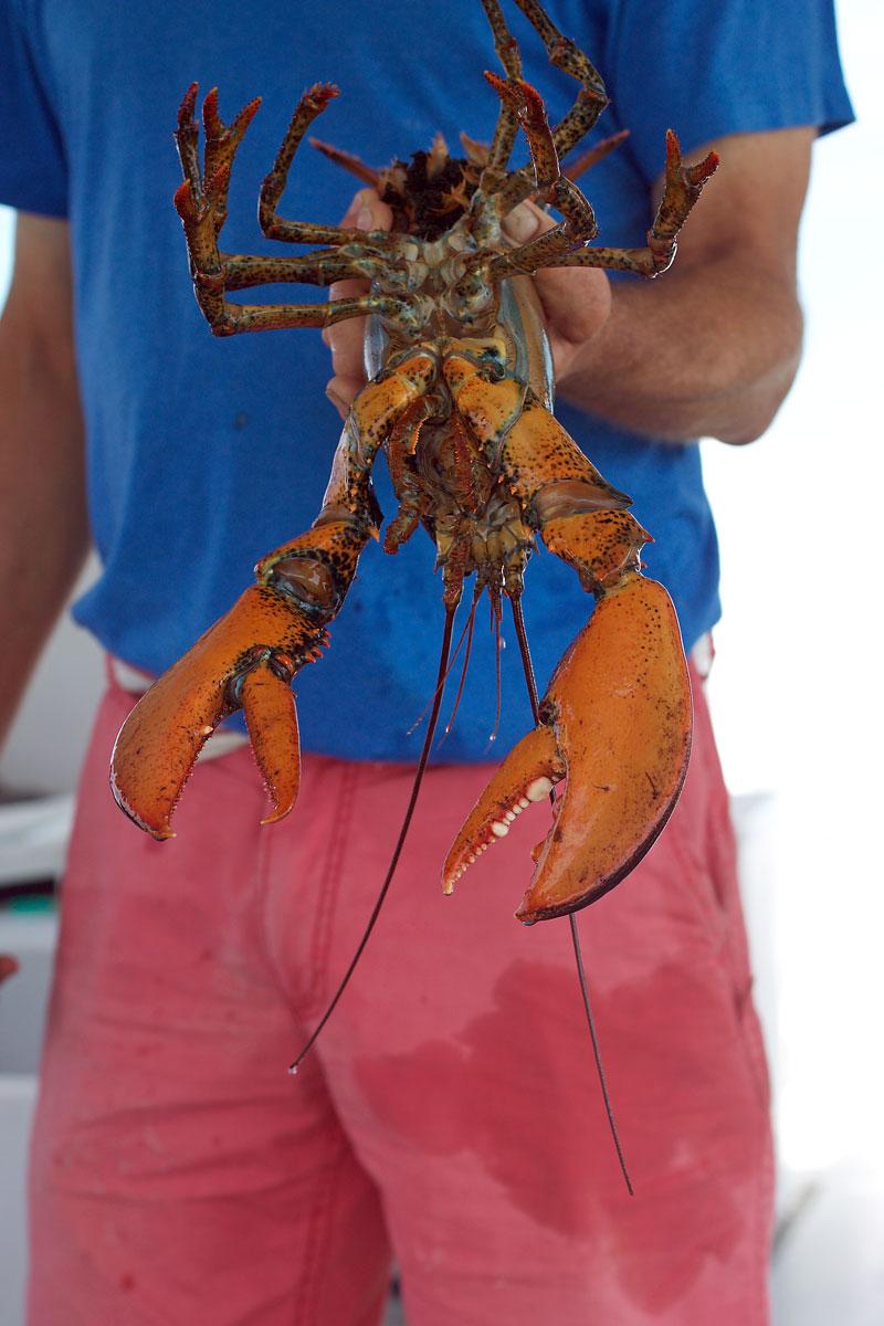 maine-lobster.jpg