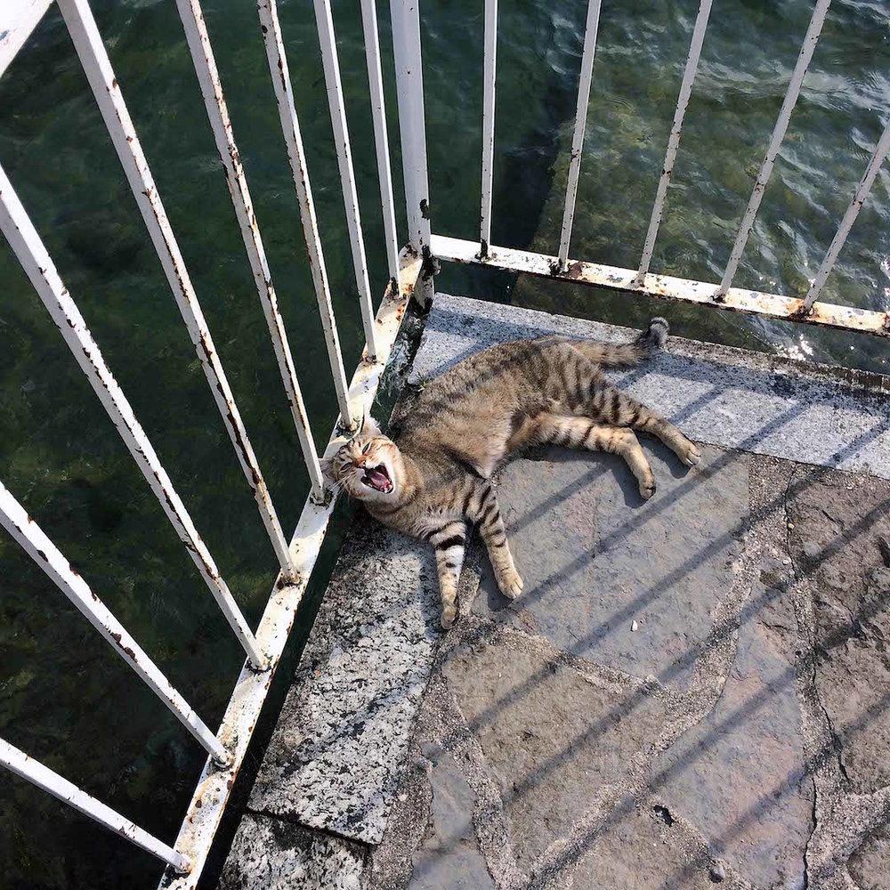 Cats-in-Lake-Como.jpg