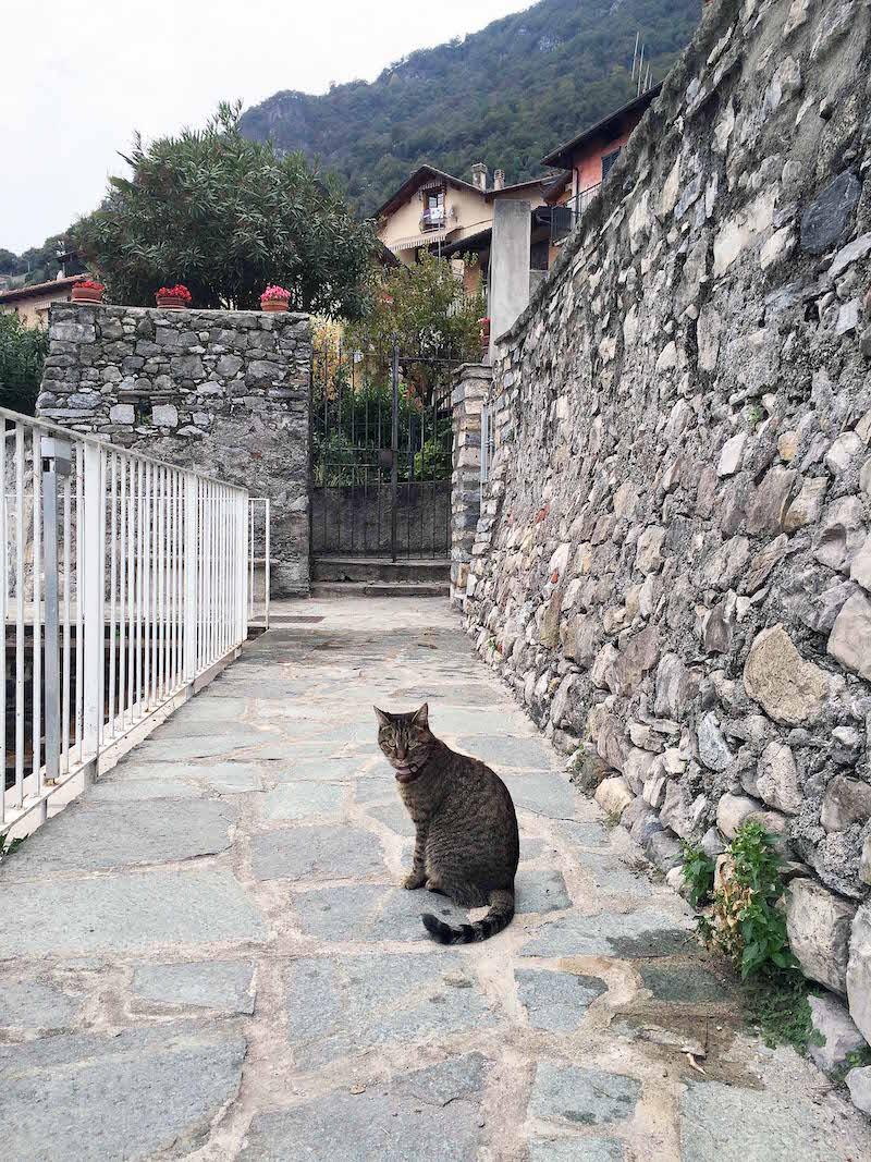 Cats-of-Como.jpg