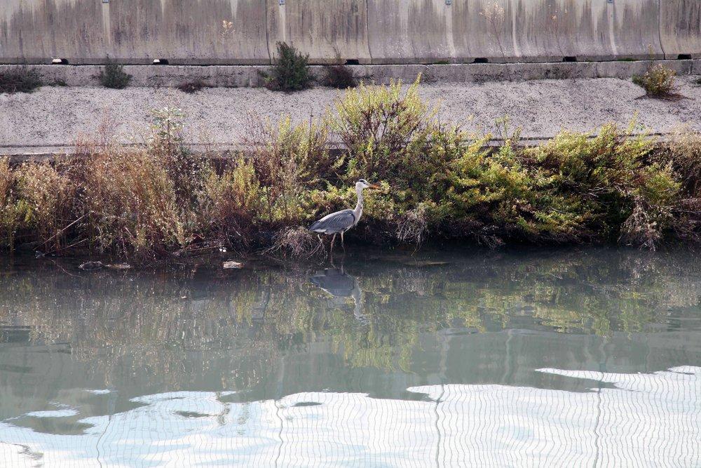 birds-in-La-Spezia-1.jpg