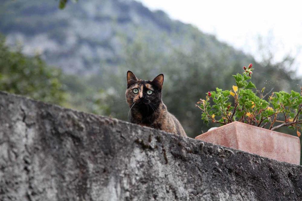 cats-in-Italy.jpg