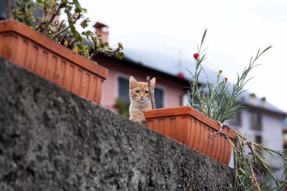 kitten-in-Lake-Como.jpg
