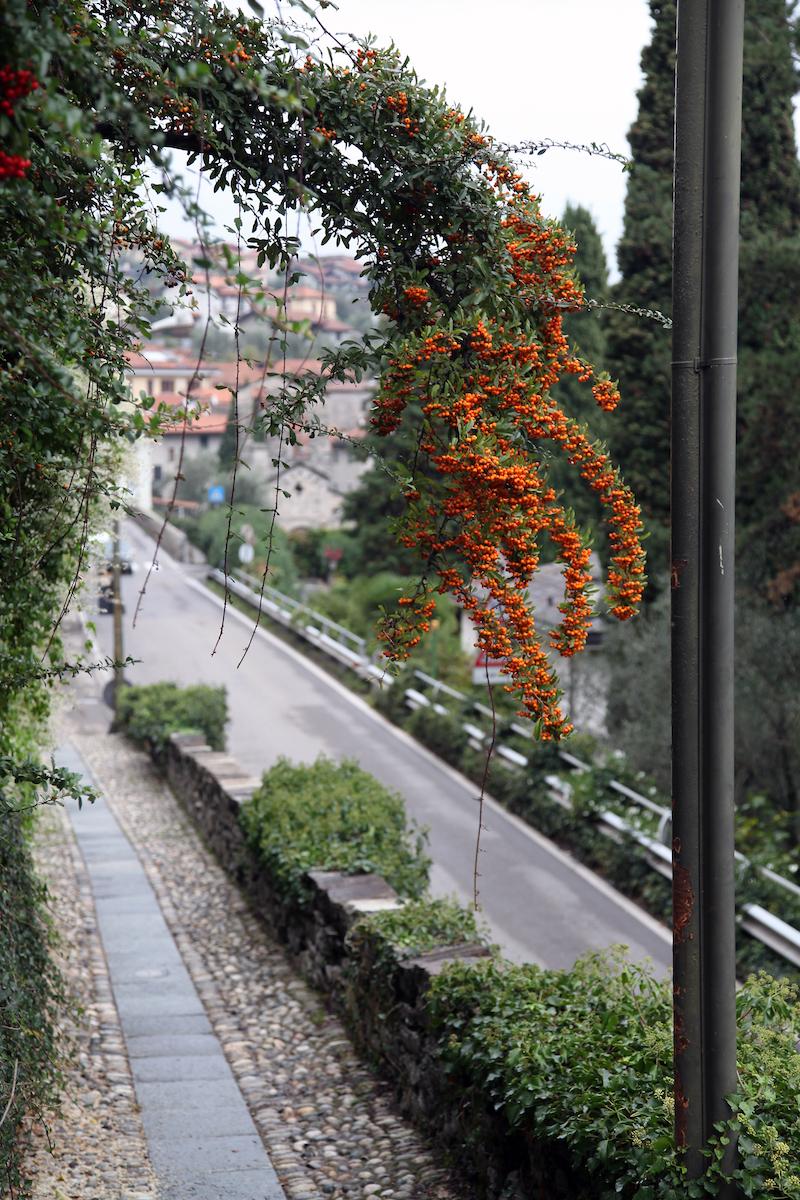 plants-in-Lake-Como.jpg