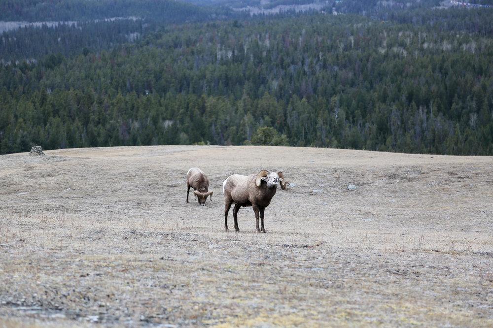 Jasper-Canada29.jpg