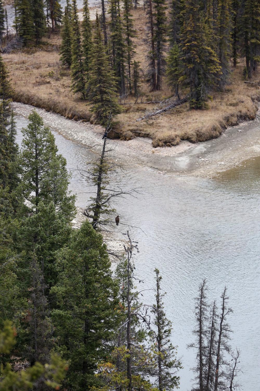 Jasper-Canada3.jpg