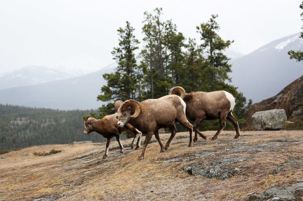Jasper-Canada32.jpg