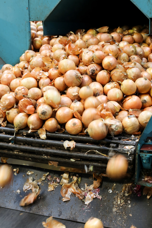 Minkus-Family-Onion-Farm11.jpg