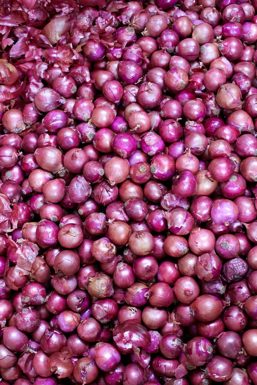 Minkus-Family-Onion-Farm26.jpg