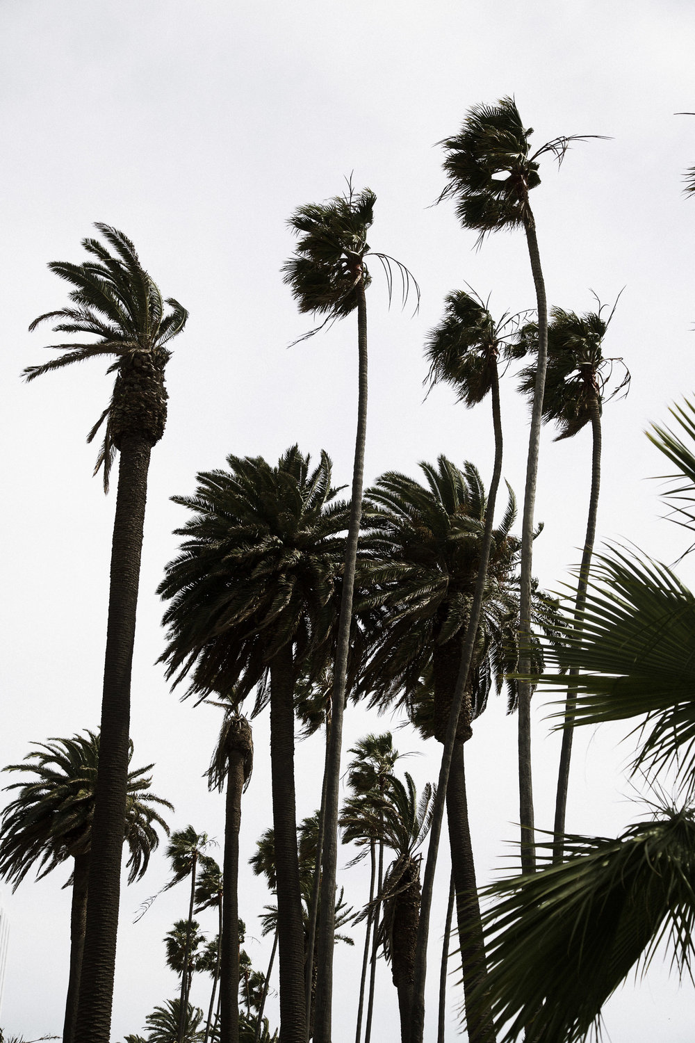 california-palm-trees.jpg