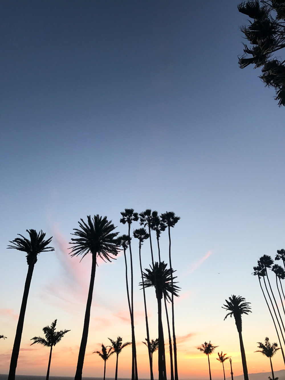 palm-trees-and-sunset.jpg