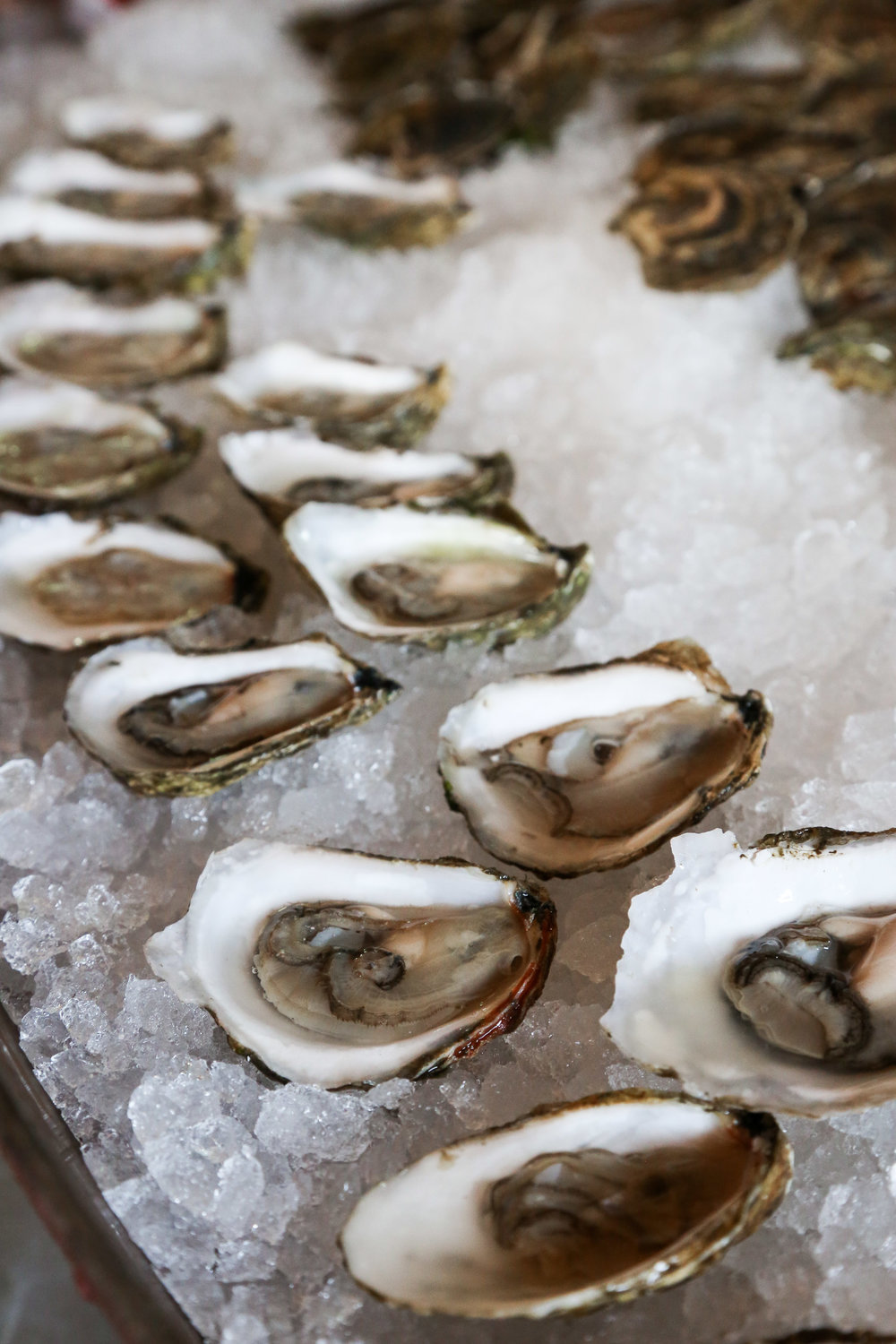 Fresh Cape Cod oysters