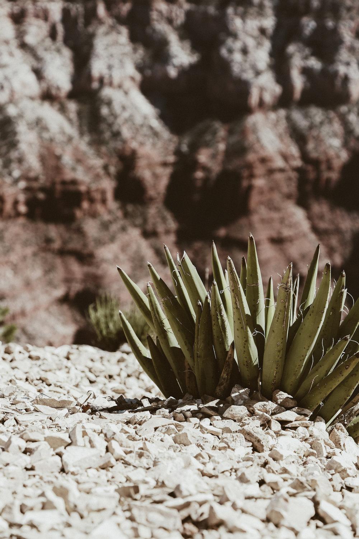 grand canyon-17.jpg
