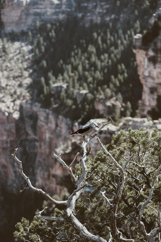 grand canyon-22.jpg
