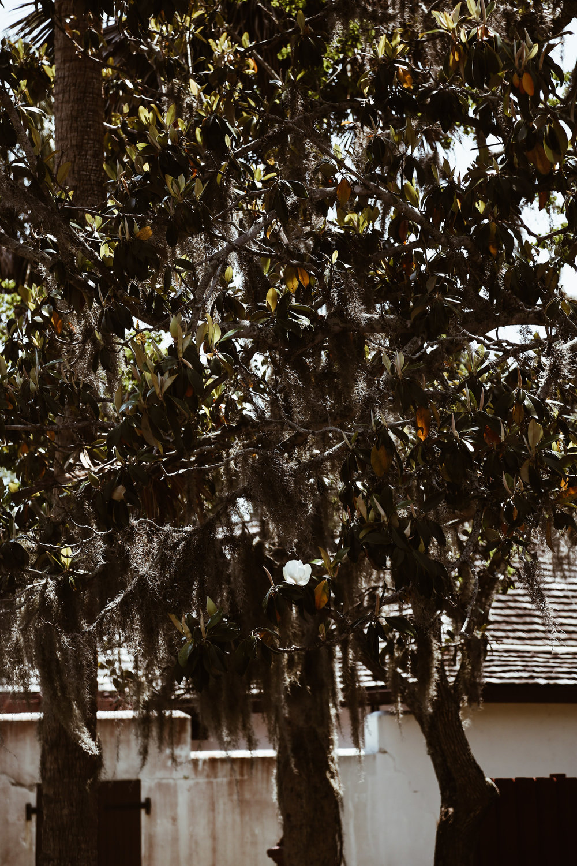 St. Augustine Florida4.jpg