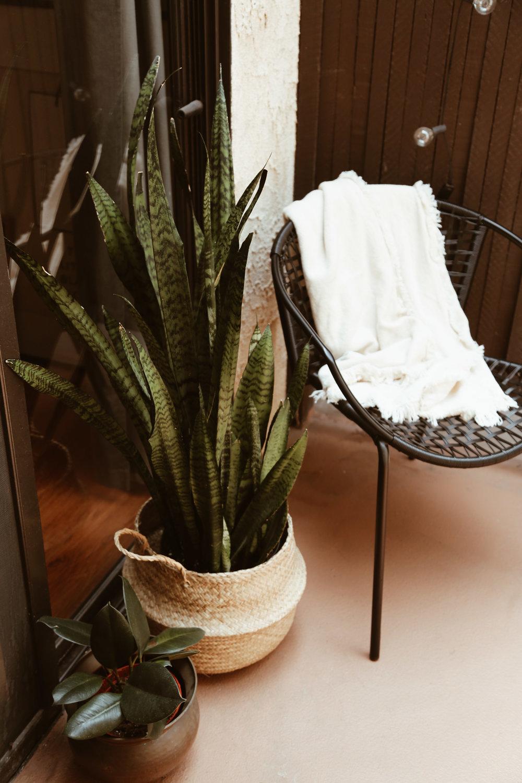 snake plant in basket.jpg