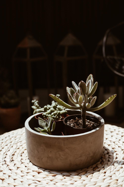 succulents in concrete planter.jpg