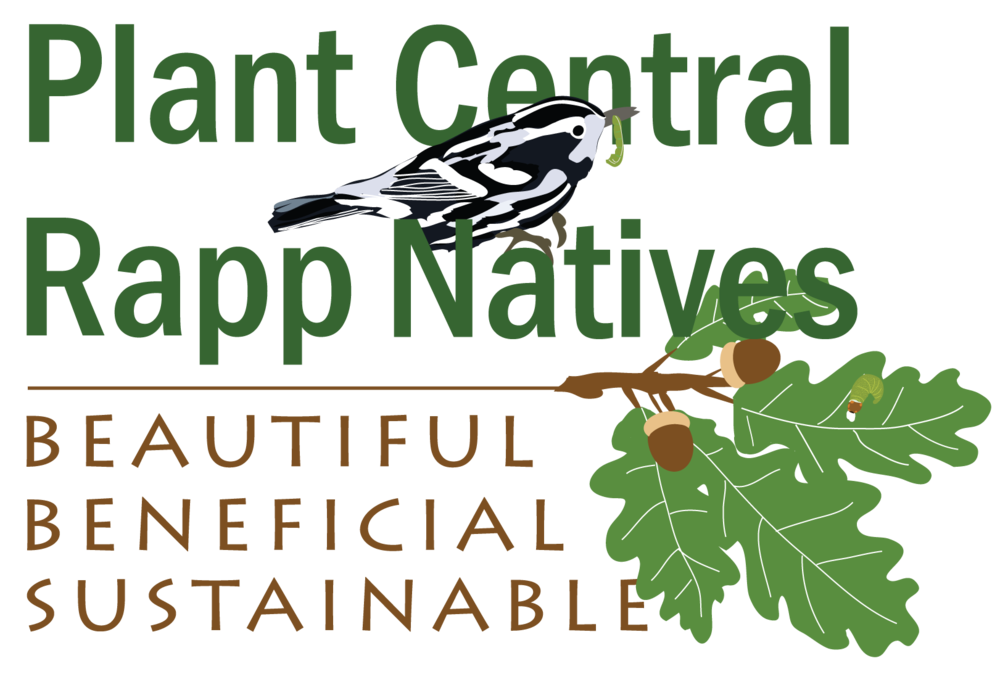 Plant-Central-Rapp-Natives-Logo.png