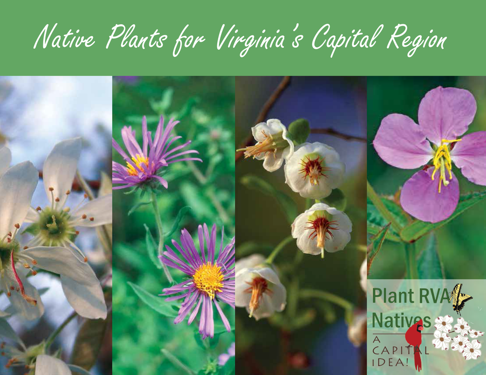 Cover-of-Virginia-Capital-Region-Guide.png