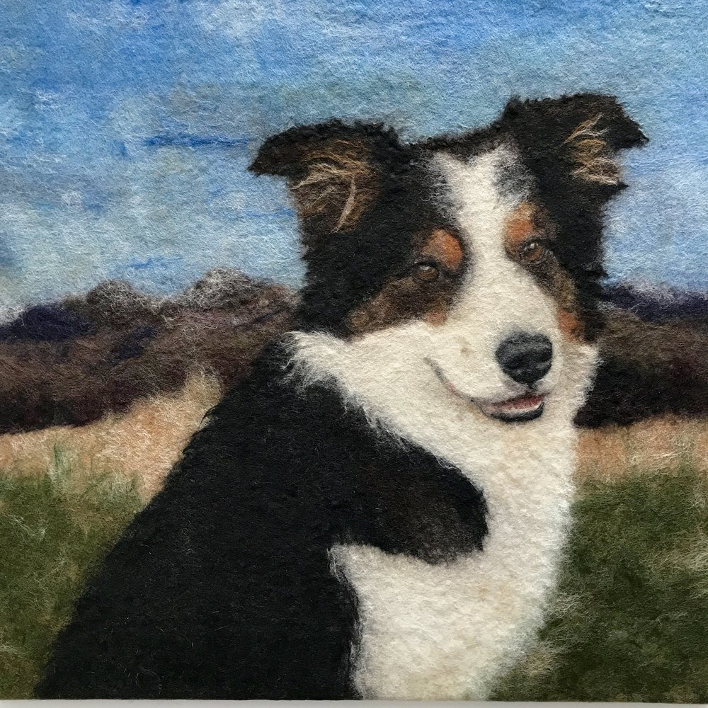 Max the Boarder Collie 61cmx61cm