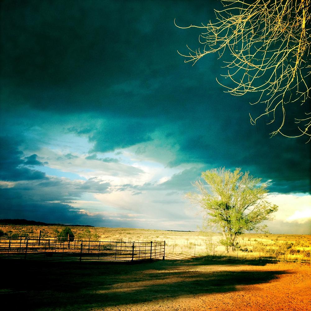 Field.NM.1