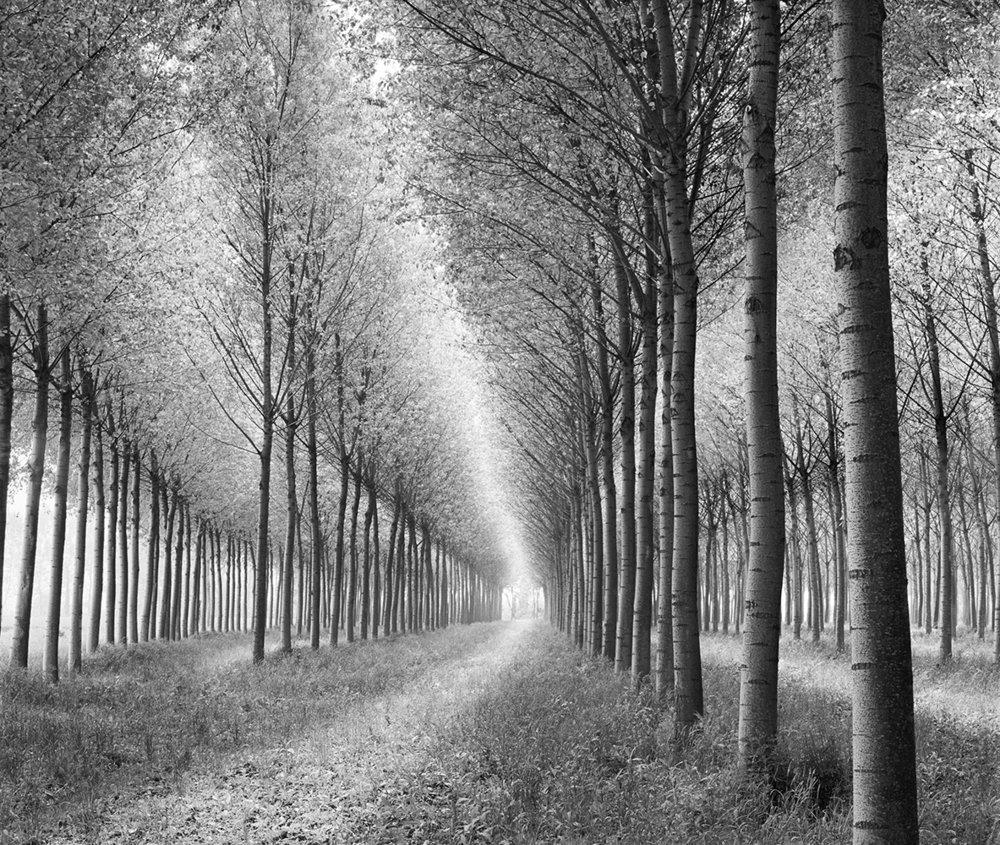 Tree Parade