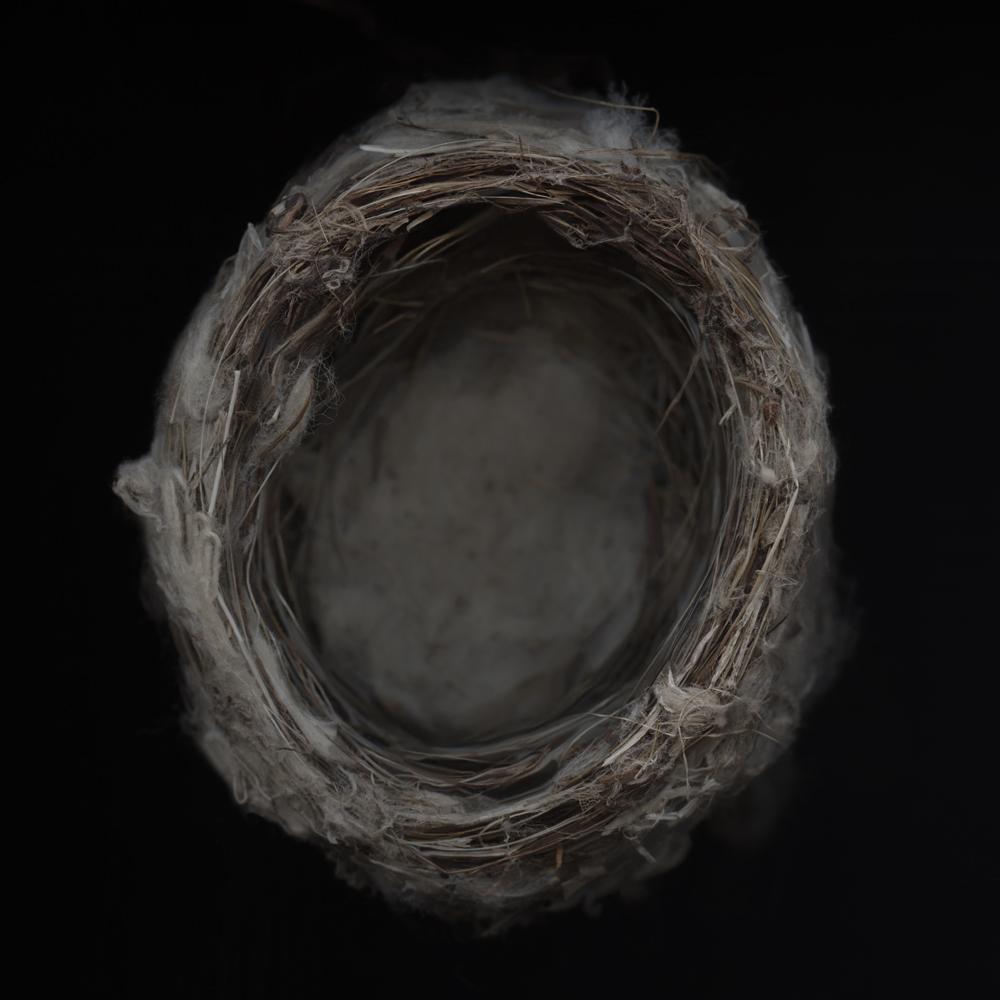 Least Flycatcher Nest.l