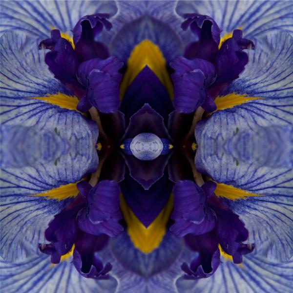 Eye of the Iris ll